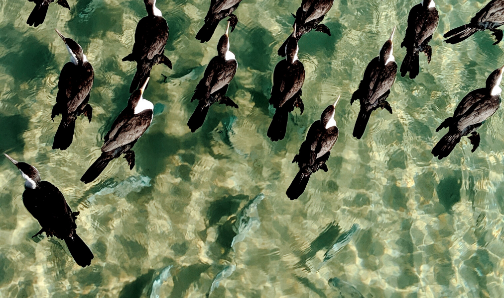 image of ducks and fish in water